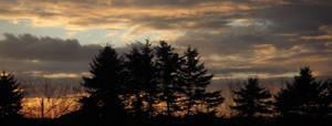 BC spruce sunset