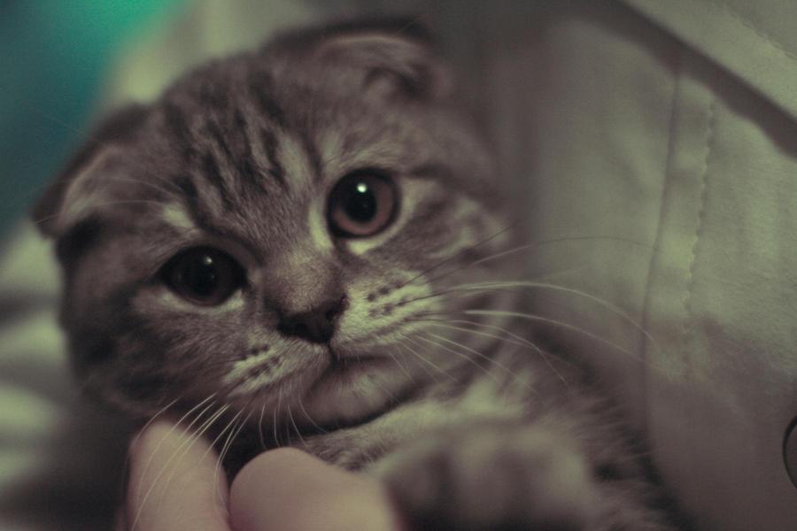 Cat by CuCat