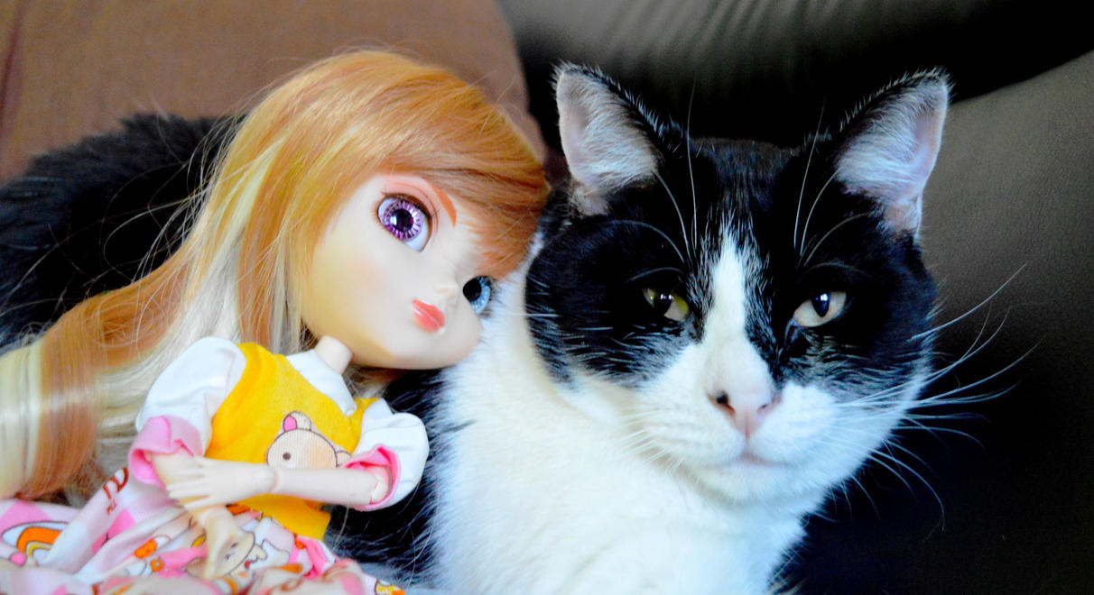 my pullip gaby and my cat by miichaelis