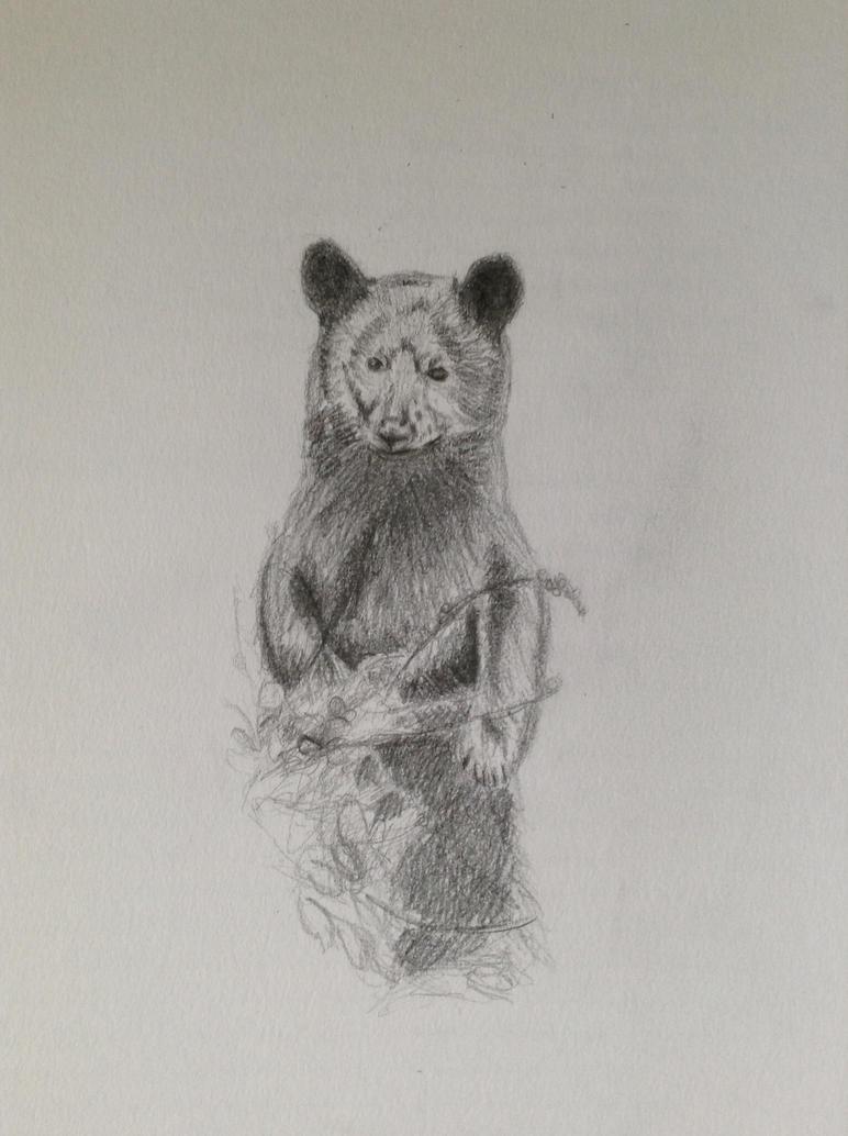 Black bear by TwilightRoxK