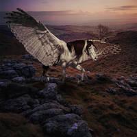 Sunrise Flight by Nikkayla