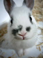 My toy rabbit . by Izu-m3