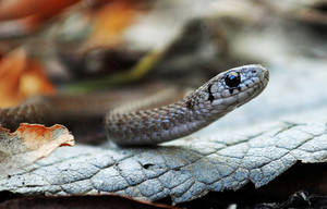 Tiny brown snake by masscreation