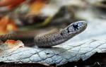Tiny brown snake