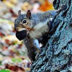 Its my nut