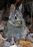 Baby Bunny by masscreation