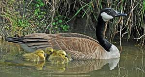 Proud parent by masscreation