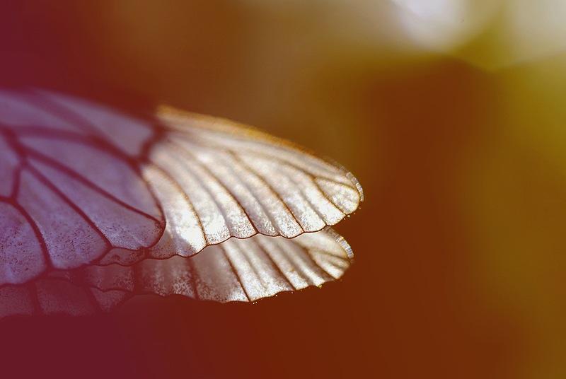 butterfly by antiteza