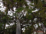 Tree top + Birds