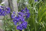 Flowers + Bee