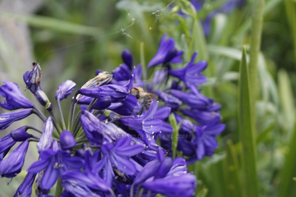 Flowers + Bee by jomy10