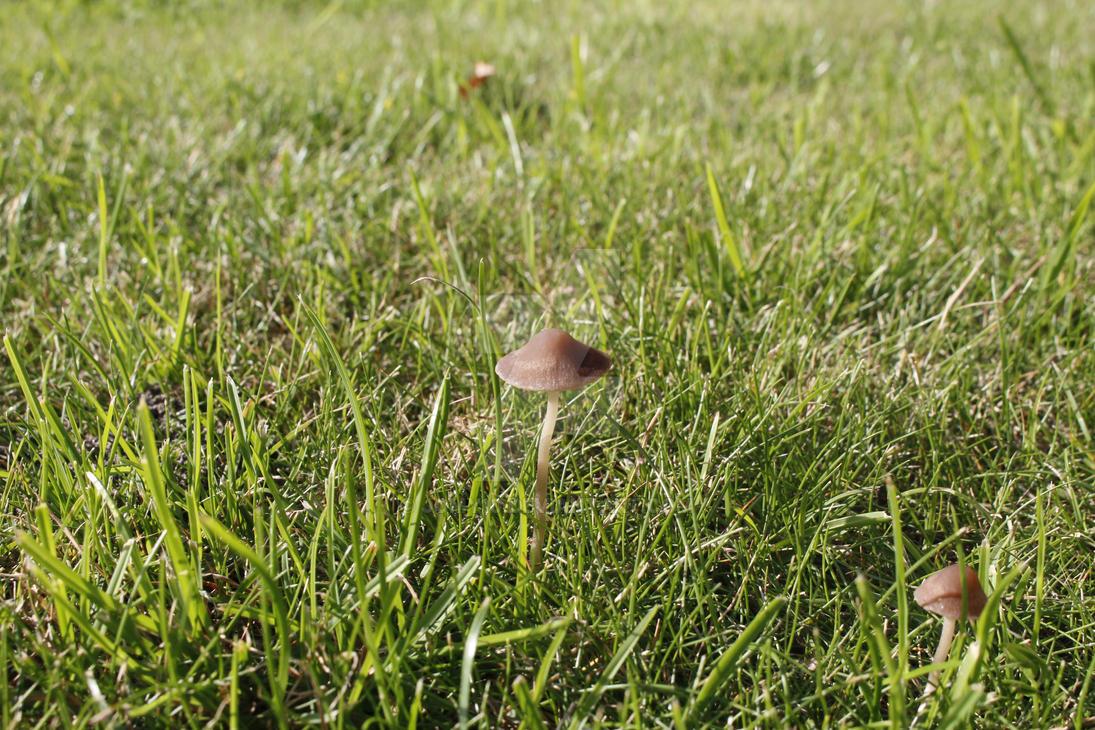 Mushroom 2 by jomy10