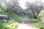 Mystic Path 2