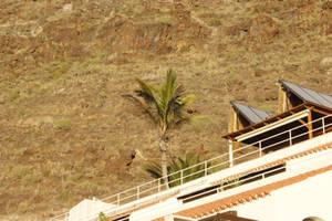 Palm Tree by jomy10
