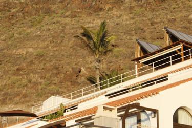 Palm Tree 2 by jomy10