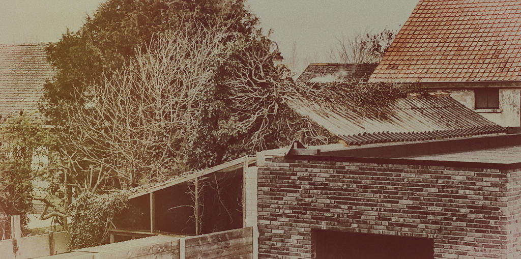 Tree growing on rooftop? by jomy10