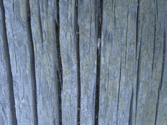 Driftwood Texture 3 by williamMalone