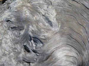 Driftwood Texture 7