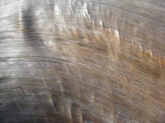 Driftwood Bend