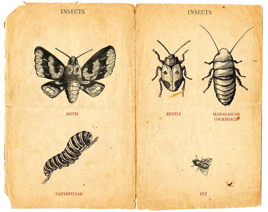 little insects by El-ArGeNtO