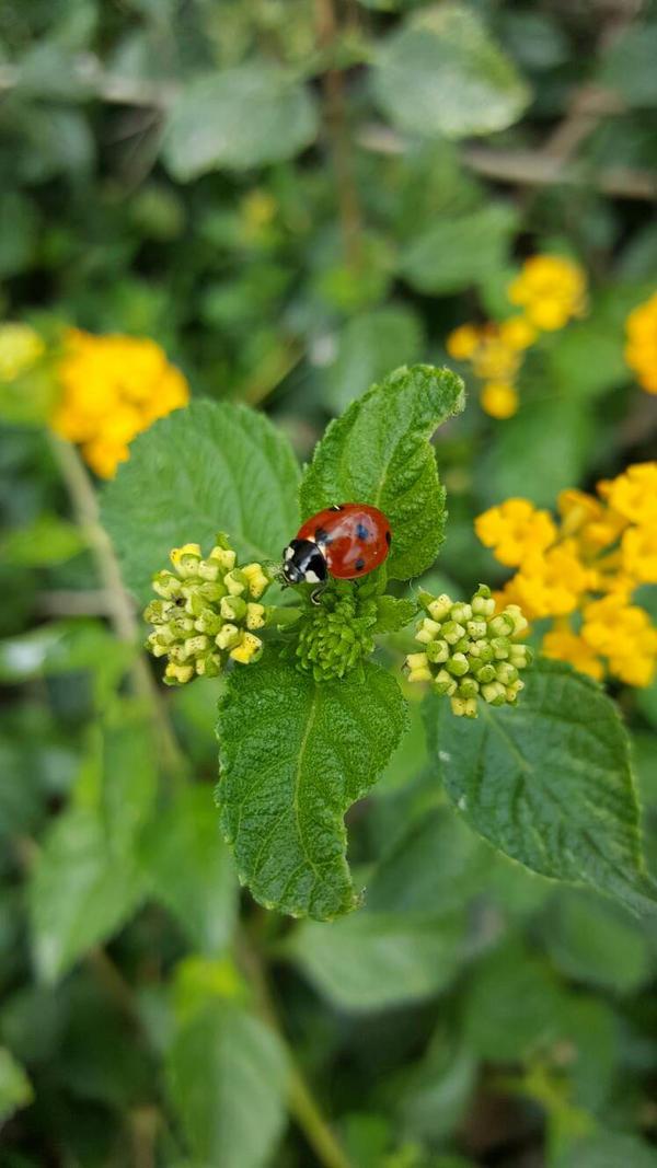 Ladybug. Austin, Tx by KaylynnStanley1