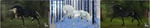 HorseAdopt 8 [OPEN] by JayOWOJo