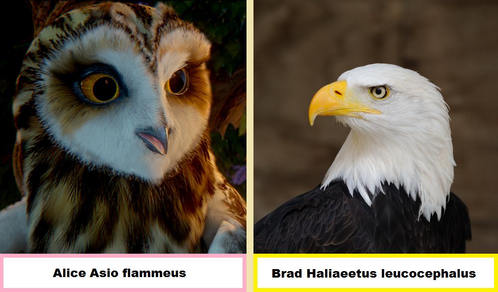 War Birds Main Character Bios by Avationrocks10