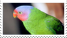 Red-cheeked Parrot Stamp by fifilis