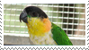 Black-headed Caique Stamp by fifilis