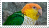 White-bellied Caique Stamp by fifilis
