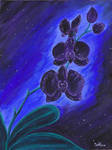 Cosmic Orchid
