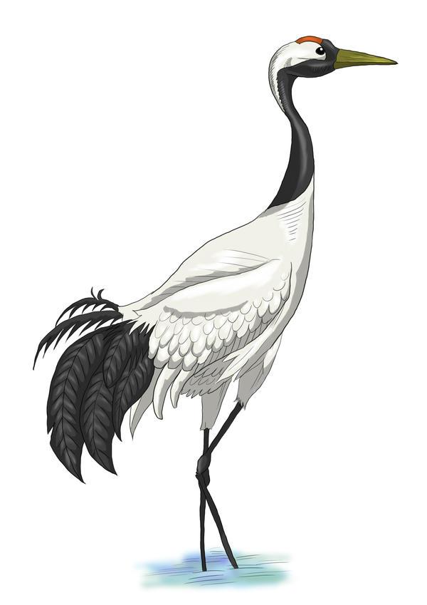 Japanese Crane Drawing - photo#16