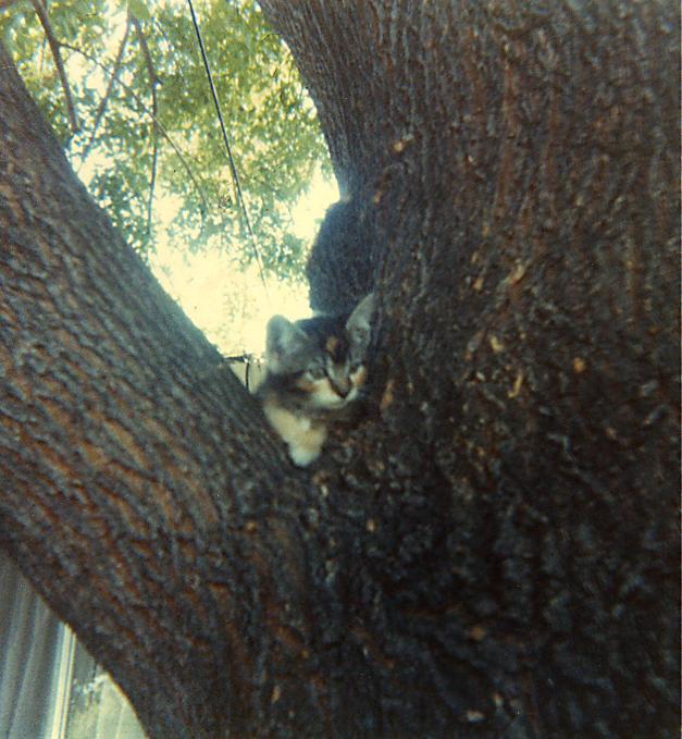 Kitten in tree by moonduster