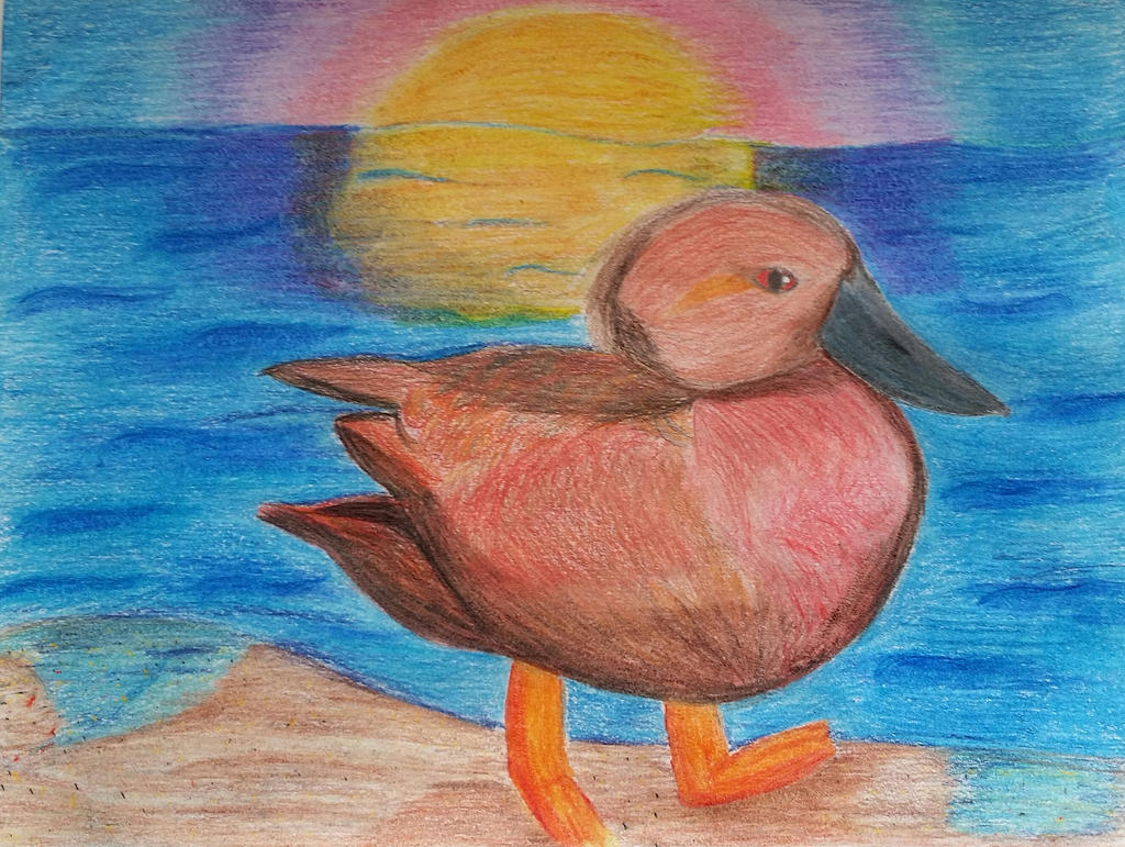 Cinnamon Teal Duck by Soshadilver