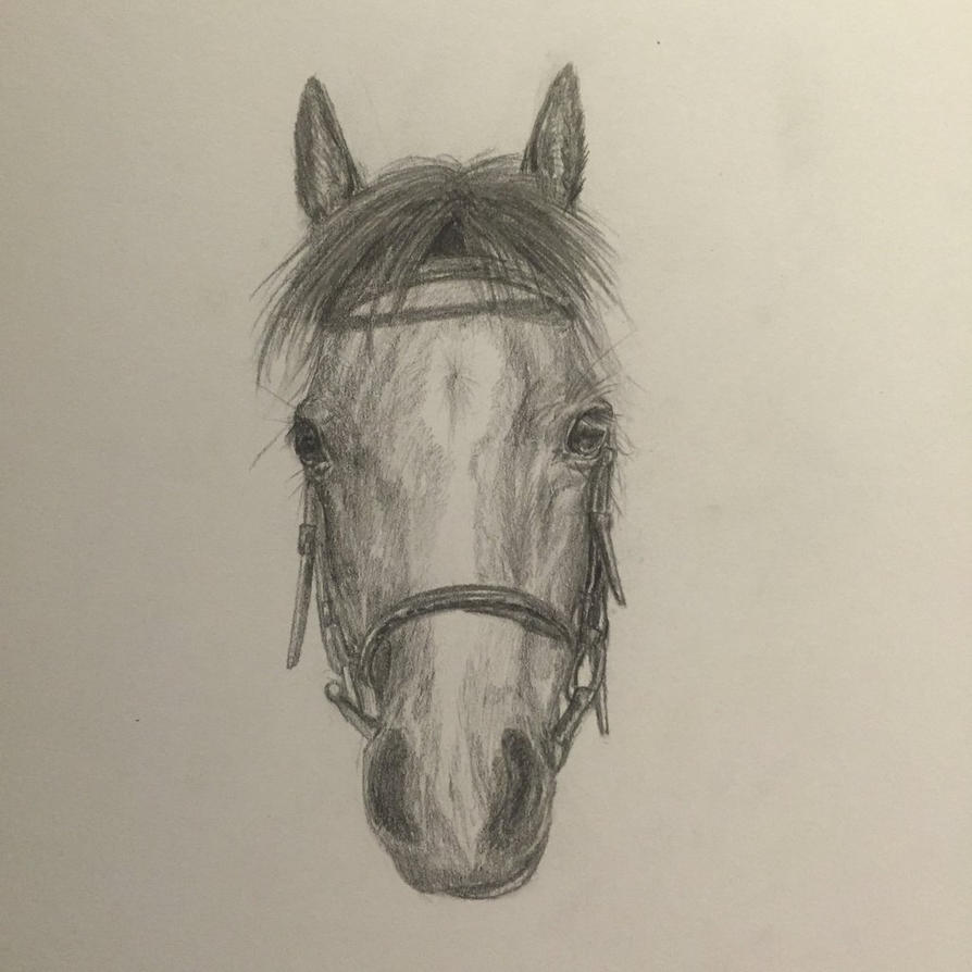 Simple horse head sketch