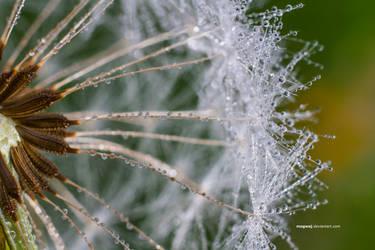 wavelet in the dandelion by mogwaj