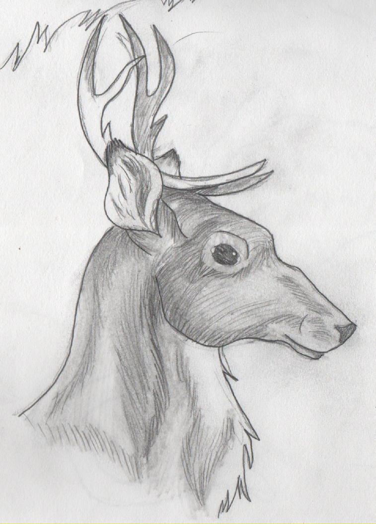 Uncategorized Good Drawings Of Animals shaded reindeer by drawingmaster1 on deviantart drawingmaster1