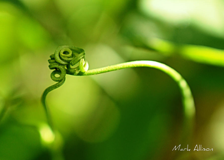 Entangled by Mark-Allison