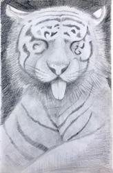 A tiger sticks its tongue out