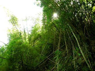 Bamboos by Artricate
