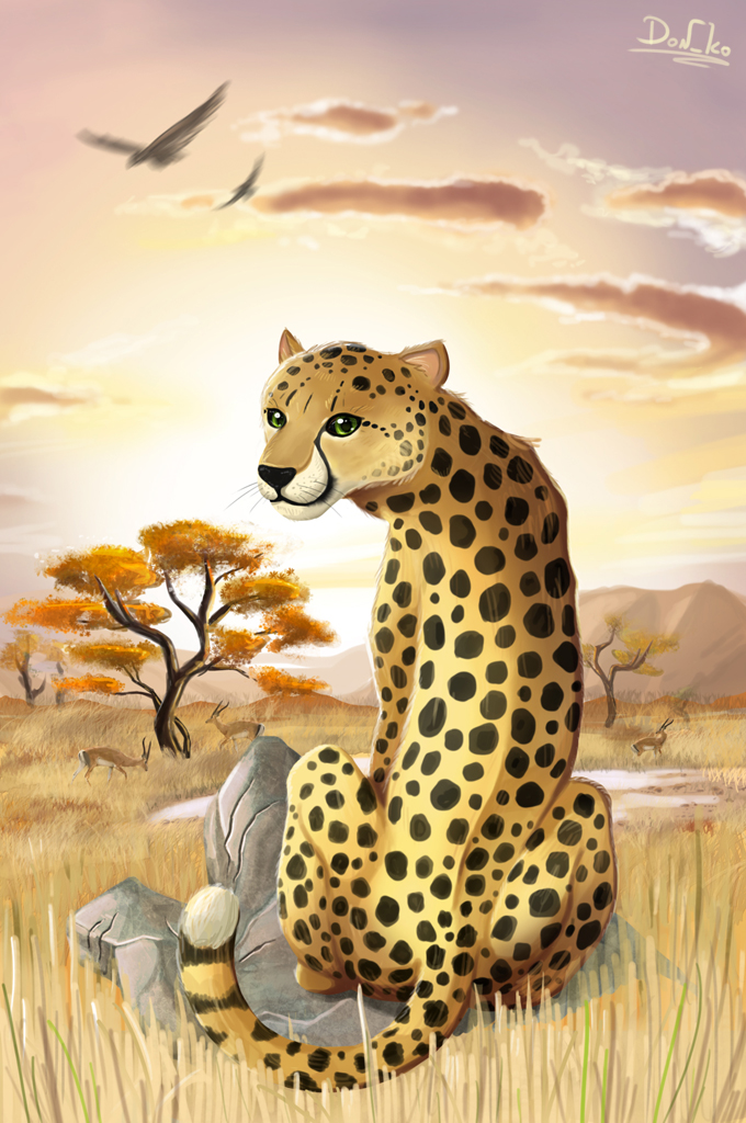 cheetah by Don-ko