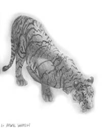 Drinker tiger grafika