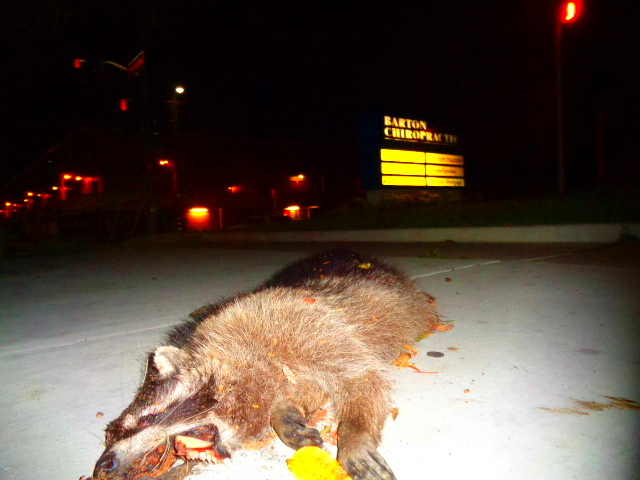 Dead Coon 3 by Germanicus-Fink