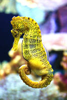 Seahorse II by JPattonPhotography