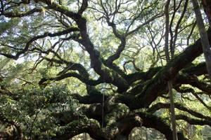 Angel Oak by JPattonPhotography