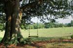 Athens Cow Farm Swing