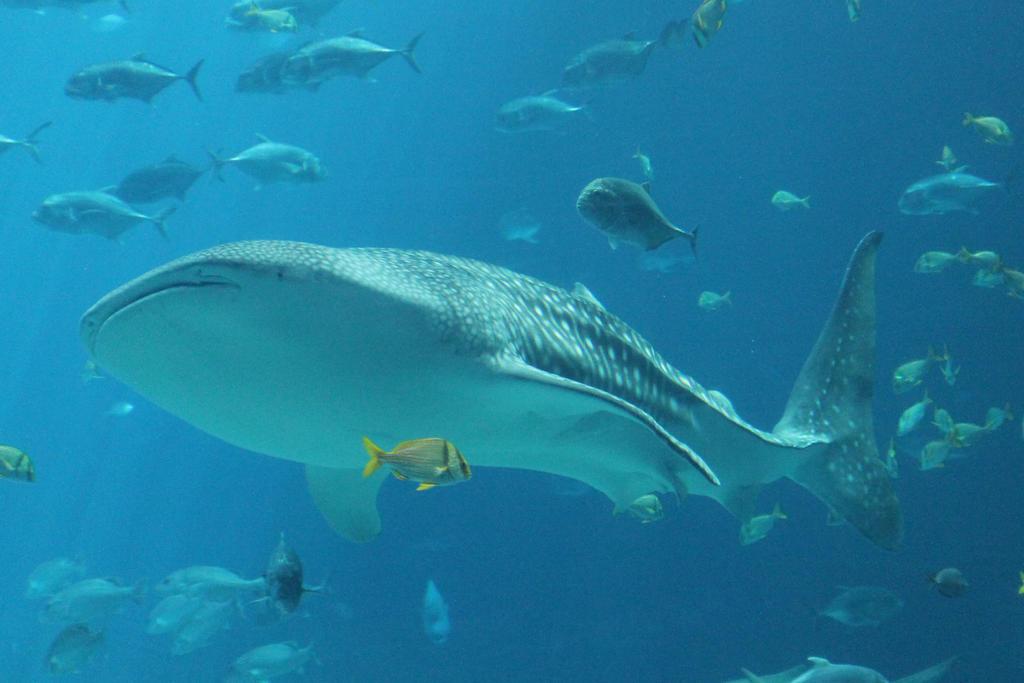 GA Aquarium 451