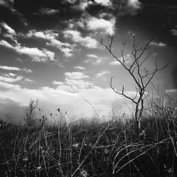 My tree by SevimDalan