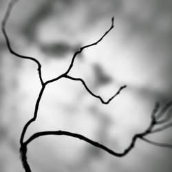 living branches by SevimDalan