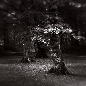 trees of the darkness